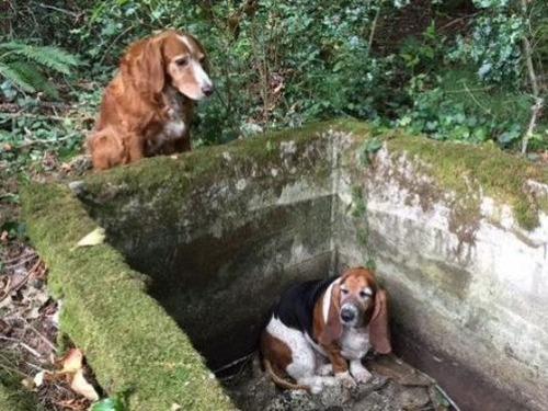 2匹の犬が1週間行方不明01