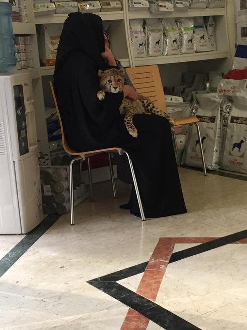 ドバイの獣医の待合室01