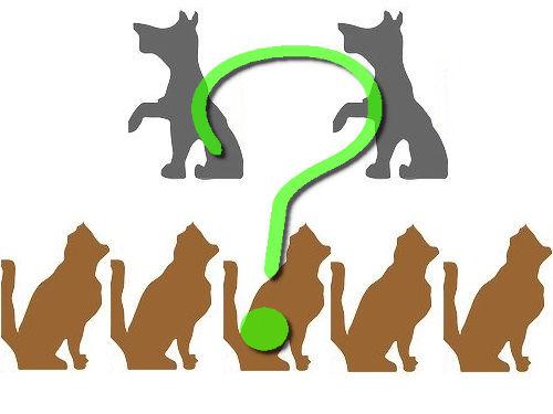 5匹の猫と2匹の犬00