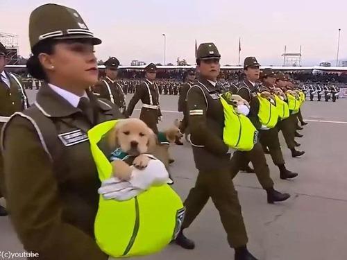 警察犬の赤ちゃんたちが抱っこされながらチリの軍事パレードに参加