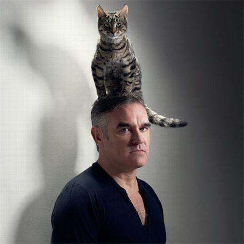 猫を頭乗せ16