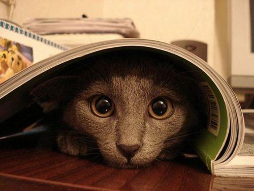 猫は見ている17