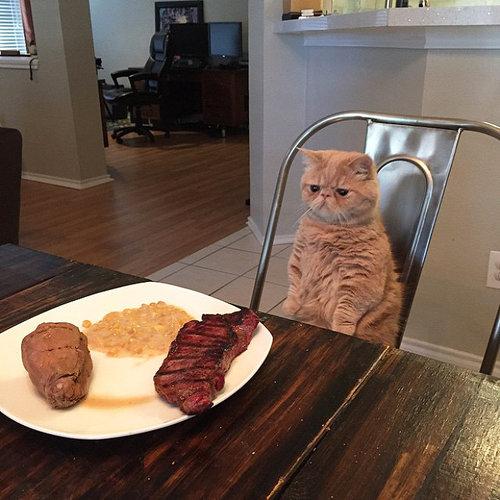 自分を人間だと思ってる猫12