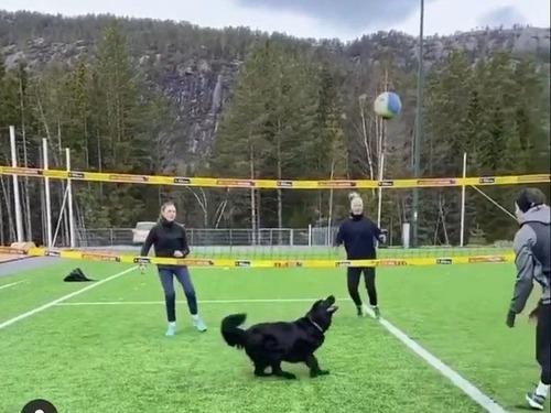 バレーボールのトスが天才犬00