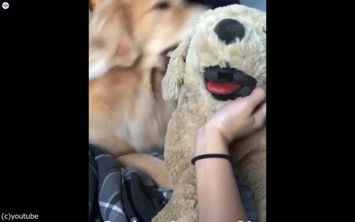 犬の嫉妬03