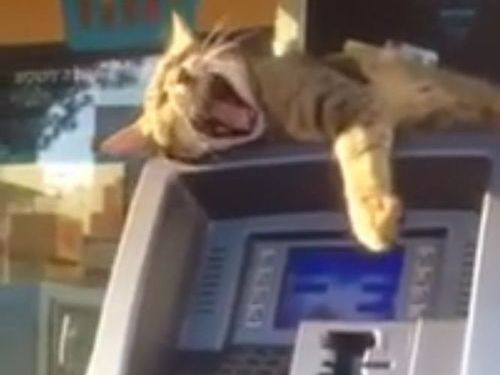 ATMの番猫05