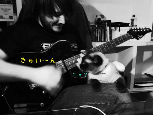 ギターを弾いてたらヒザに猫が乗ってきた00