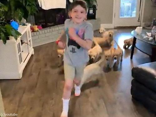 レトリバーの子犬たちと追いかけっこ01