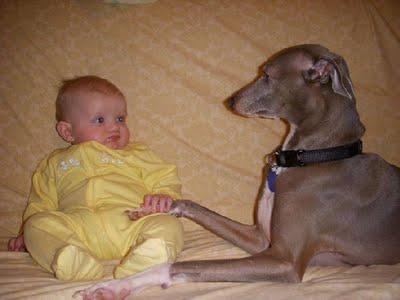 赤ちゃんとペット11