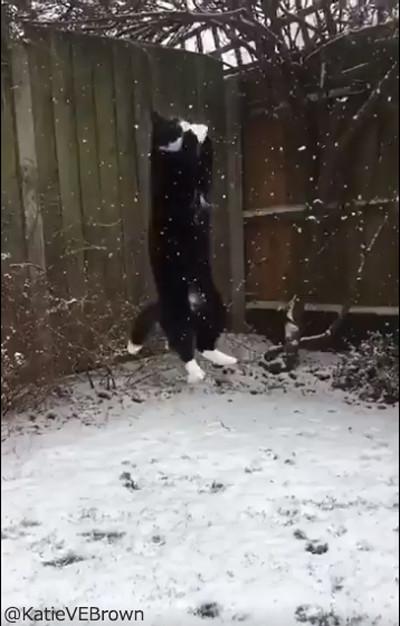 雪をキャッチするにゃんこ04