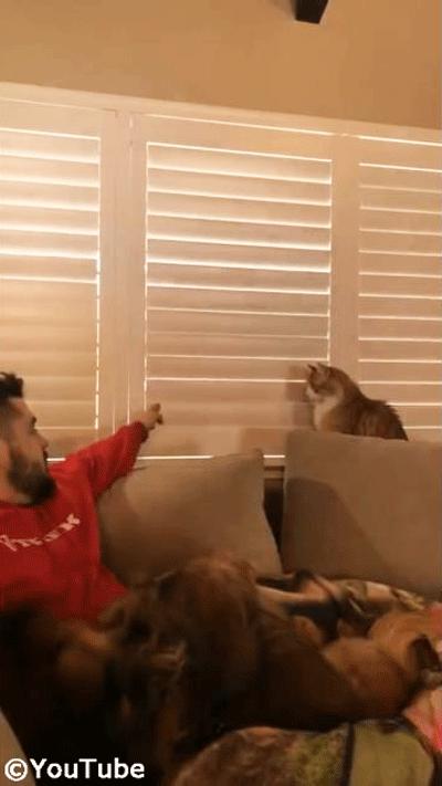 お外を見たい猫 VS ブラインドを閉めたい飼い主さん02