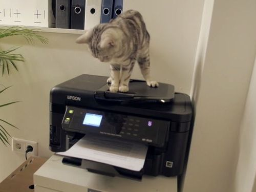 職場が猫だらけだったら08