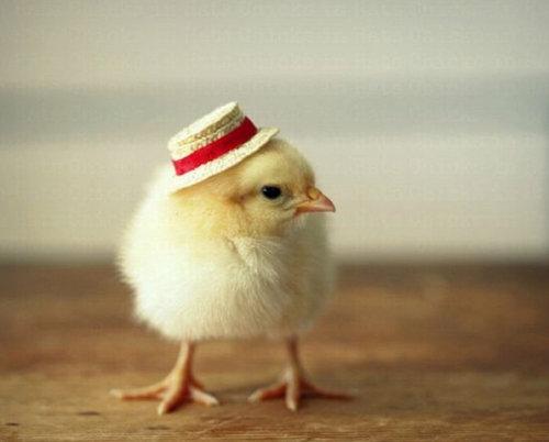 ひよこに帽子10
