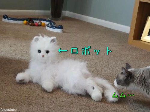猫型ロボットと初体面した猫たち00