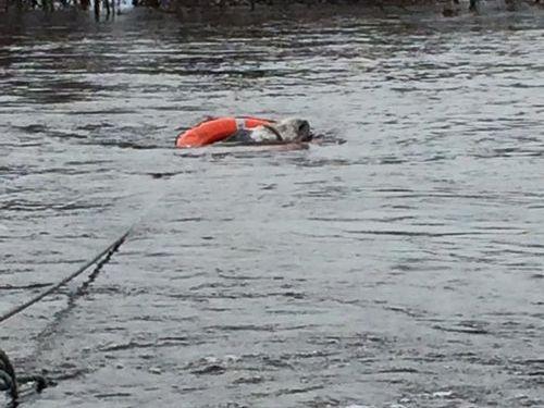 洪水から救出されたロバに笑顔01