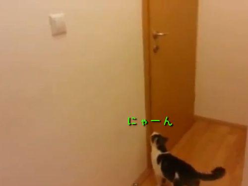 家を脱出する猫00