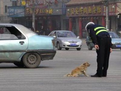 犬と警官00