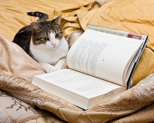 読書猫10