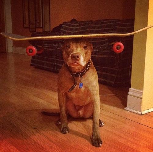 頭に載せる犬01