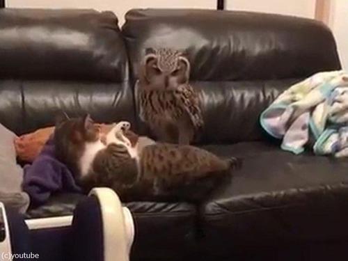 「ここはオレのソファだ」01