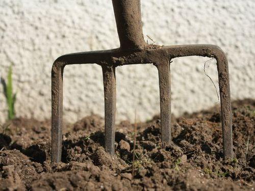 庭を掘っていたら恐竜が出てきた00