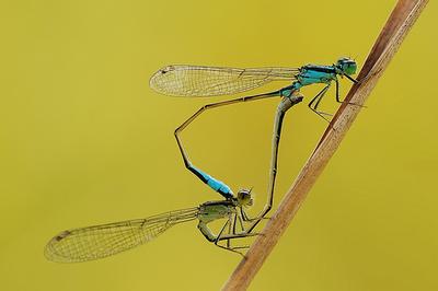 虫の交尾10