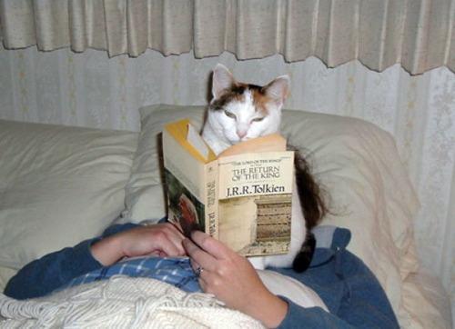 猫の恐怖09
