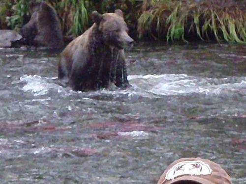 アラスカの写真02