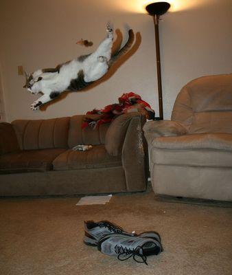 猫ジャンプ12