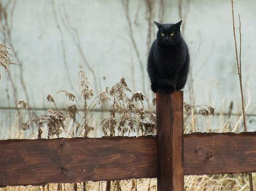フクロウ猫05