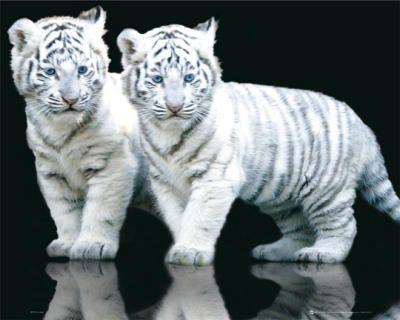 虎の子12