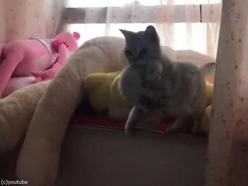 6匹の子猫を生んだママの行動07