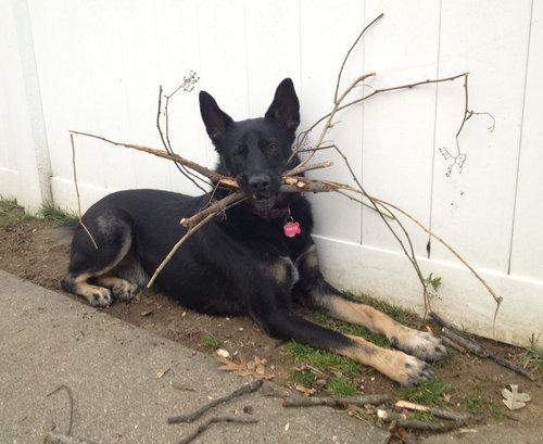 フェッチ中毒の犬01