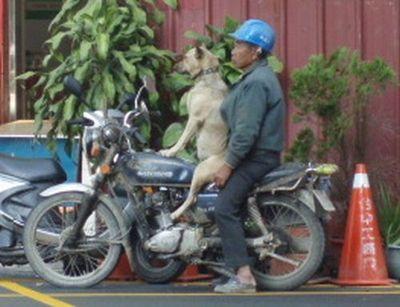 犬と離れられない人々20