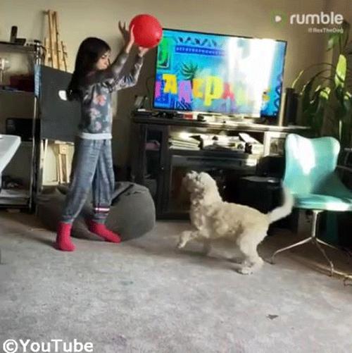 バルーン遊びを楽しむ子ども&ワンちゃん01