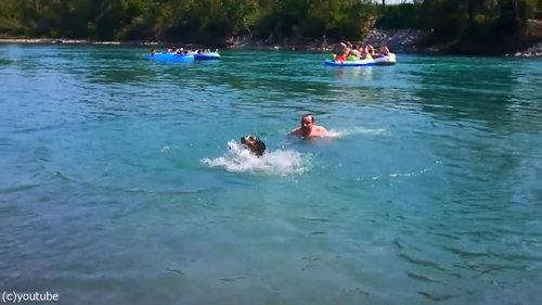 豪快に泳ぎを教えてくれる犬04