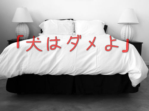 犬をベッドに寝かせるのは禁止00