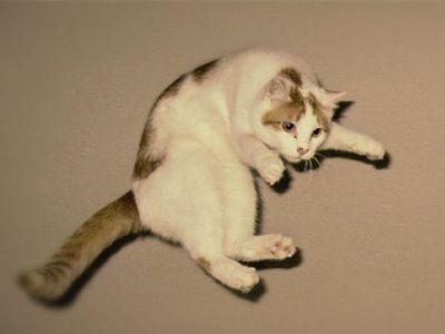 猫ジャンプ00