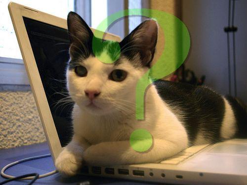 キーボード猫00
