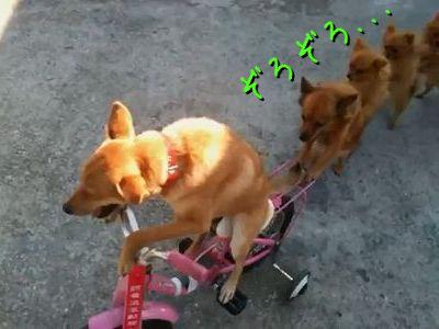 犬トレイン