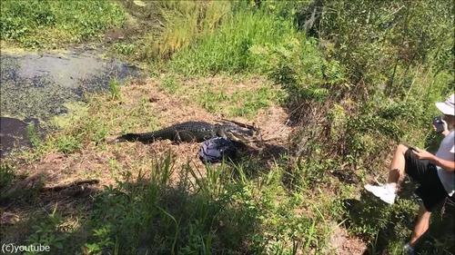 フロリダのワニに襲われる03