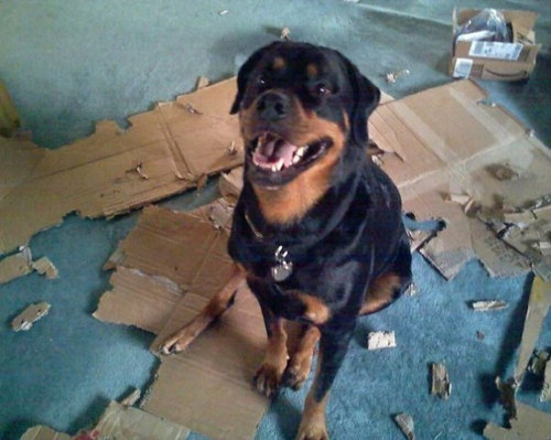 箱好きの犬13