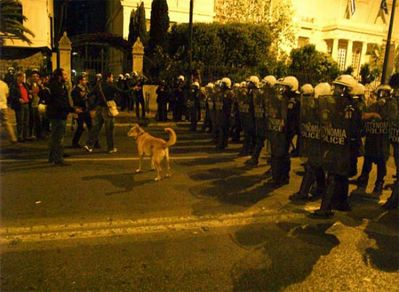 ギリシャの暴動犬14