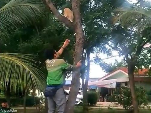 木から降りられない猫00
