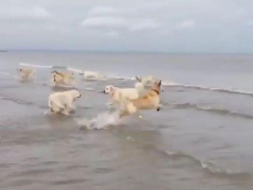 犬の水切り01