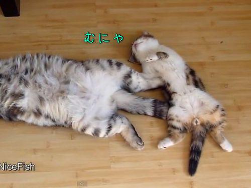 おかしな寝方の猫たち00