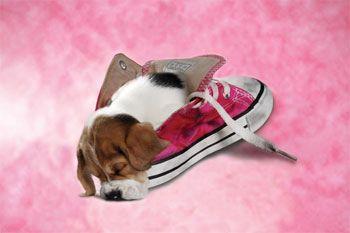 靴の中の犬12