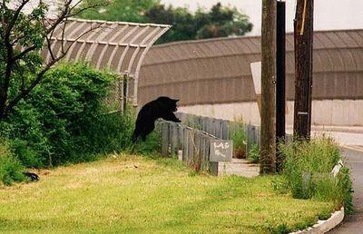街中に現れた動物たち09