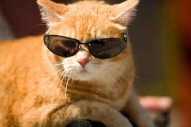 メガネ猫16