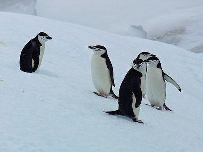 ペンギンガール00